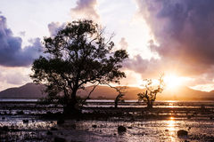 Tree in the sea with color of sunset and storm cloud Stock Photos