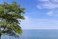 Tree, Sea and Copyspace Royalty Free Stock Images