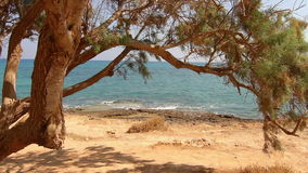 The tree by the sea Stock Image