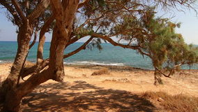 The tree by the sea Royalty Free Stock Images
