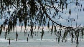 Tree and Sea. Tree and Sea at HuaHin Thailand Stock Photo