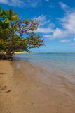 The tree by the sea, Kauai. A tree on Anini Beach in Kauai, Hawaii Stock Images
