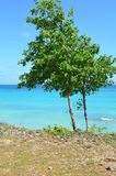 Tree and sea Stock Image