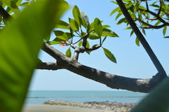 Tree sea. This picture shows beauty of  nature in the sea in thailand. This  view can see in Mrigadayavan Palace Stock Photos