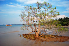Tree in sea sand at Koh Mak Royalty Free Stock Photos