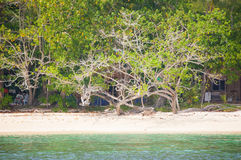 Tree sea sand. White sand beach at small island in Trang province,Thailand Stock Photography