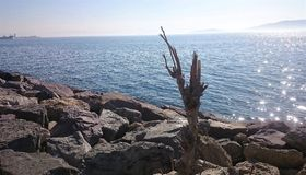 Beautiful Tree and sea view with stones. Tree with stones and sea on the background Royalty Free Stock Photography