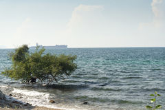 Tree in the sea. Tree in the sea in a summer Sunny day Royalty Free Stock Photo