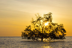 Tree in sea Royalty Free Stock Photography