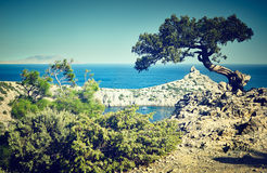 Tree and sea at sunset. Crimea landscape. Nature background Stock Images