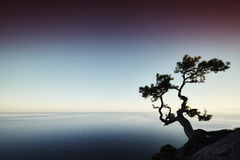 Tree and sea at sunset. Crimea landscape Royalty Free Stock Photography