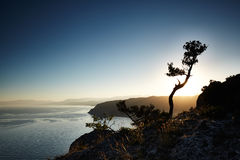 Tree and sea at sunset. Crimea landscape Royalty Free Stock Photos
