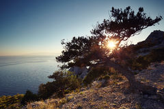Tree and sea at sunset. Crimea landscape Stock Photography