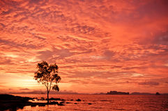 Tree and sea at sunset Royalty Free Stock Photos