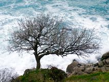 Tree on seashore. Royalty Free Stock Images