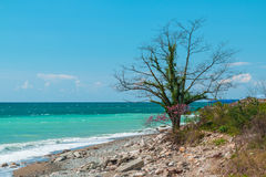 Tree on the seashore Royalty Free Stock Images
