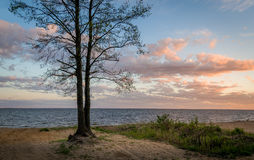 Tree on the seashore sunset view Royalty Free Stock Photography