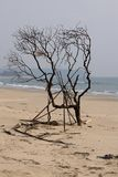 Tree on the seaside Stock Photos