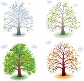 Tree in the seasons Stock Photo