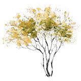 A Tree. Seasons. Early Autumn. The picture of a branchy tree painted in autumn colors Royalty Free Stock Photography