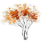 A Tree. Seasons. Mellow autumn. The picture of a branchy tree painted in colors of Gold Fall Stock Photography