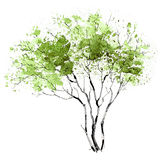 A Tree. Seasons. Spring. The picture of a branchy tree painted in spring green Royalty Free Stock Photo