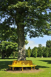 Tree seat. View of landscape, Rozelle park, Ayrshire, Scotland, showing tree trunk in foreground encircled by yellow seat Royalty Free Stock Photography