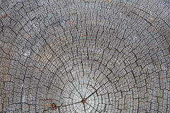 Tree section Royalty Free Stock Photos