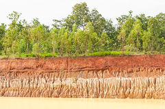 Tree and section of soil Royalty Free Stock Images