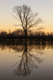 Tree See-Reflexions-Sonnenuntergang oder Sonnenaufgang Lizenzfreies Stockfoto