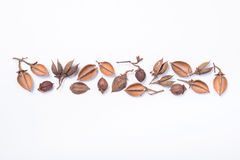 Tree seed pods arranged in a pattern Royalty Free Stock Photos