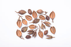 Tree seed pods arranged in rectangular pattern Stock Images