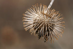 A tree seed protects itself Royalty Free Stock Photos
