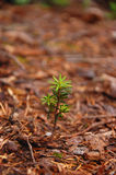 Tree seedling Stock Image