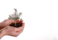 Tree seedling in handful soil. Green tree seedling in handful soil in hand on an isolated background Royalty Free Stock Image