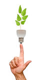 Tree Seedling In Lamp Stock Image
