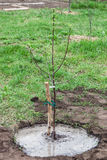 Tree seedling planted in soil stock images