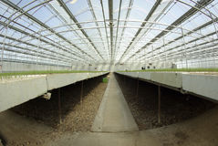 Tree seedlings in greenhouse Royalty Free Stock Photography