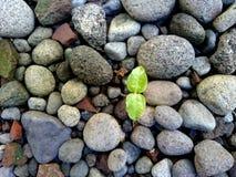 Tree seeds grow between rocks. Textured background stock photo