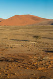 Tree seen from dune 45. At sunrise, Namibia Stock Photography