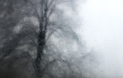 Tree seen through wet glass Royalty Free Stock Photos