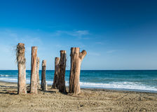 Tree Sentinels on a beach in Marbella, Spain. A group of dead trees at the waters edge on a beach in Marbella, Souther Spai, Costa del Sol Stock Photography