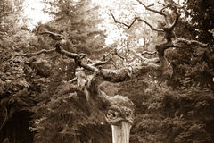 Tree sepia. Lines curves old 50mm sunset nature central  NY graveyard Stock Photos