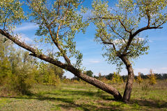 Tree on september meadow Stock Image