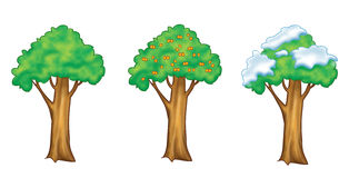 Fruit tree set. The same apricot tree in the different seasons. Digital illustration royalty free illustration