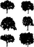 Tree set Royalty Free Stock Photos