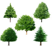 Tree set Stock Images
