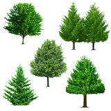 Tree set Stock Image