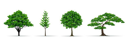 Tree set realistic vector illustration Royalty Free Stock Images