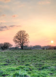 Tree and the setting sun Royalty Free Stock Photo